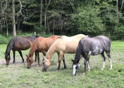 Rivers Edge Horse Rescue – August 3, 2021