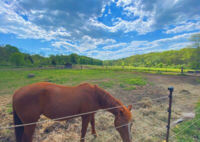 Rivers Edge Horse Rescue – August 6, 2021