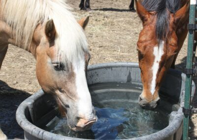 Rivers Edge Horse Rescue – July 19, 2021