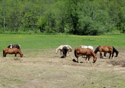 Rivers Edge Horse Rescue – July 27, 2021