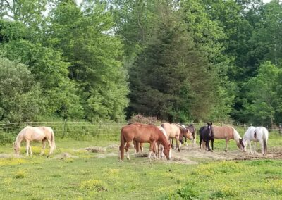 Rivers Edge Horse Rescue – July 26, 2021