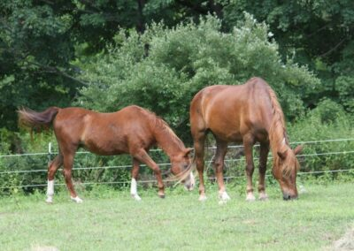 Rivers Edge Horse Rescue – July 20, 2021